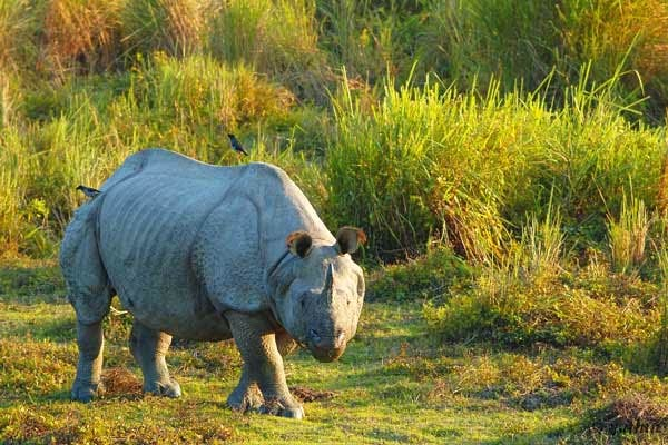 02 nights / 03 days Kaziranga tour package, Kaziranga tour package, 02 nights / 03 days wildlife tour in Kaziranga, 02 nights / 03 days wildlife tour in Assam, 02 nights / 03 days wildlife tour