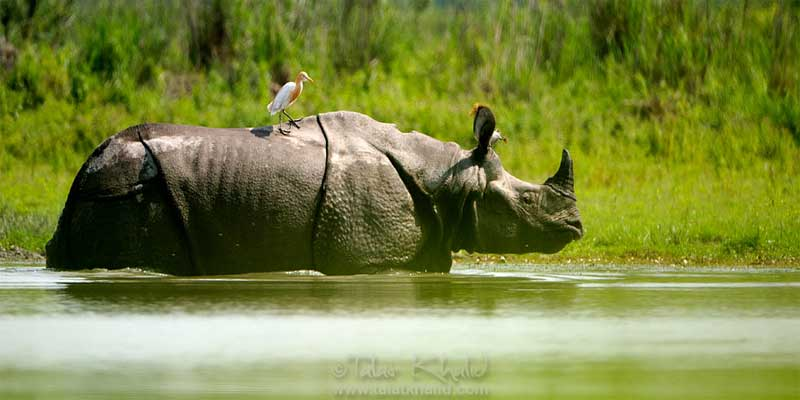 Guwahati-Kaziranga-Shillong-Cherrapunjee Tour Package, 5 Nights & 6 Days Guwahati-Kaziranga-Shillong-Cherrapunjee Tour Package,5 Nights & 6 Days Northeast tour Package, Cheap & best Northeast Tour package