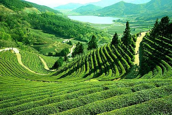 Darjeeling -Gangtok Tour Package